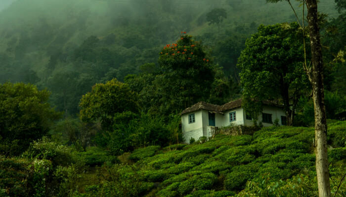 Day 3 - Coorg - Wayanad